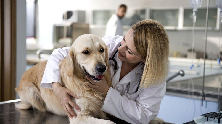 Цефтриаксон при бронхите у собак