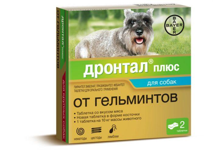 Таблетки от глистов для собак – как правильно дать лекарство
