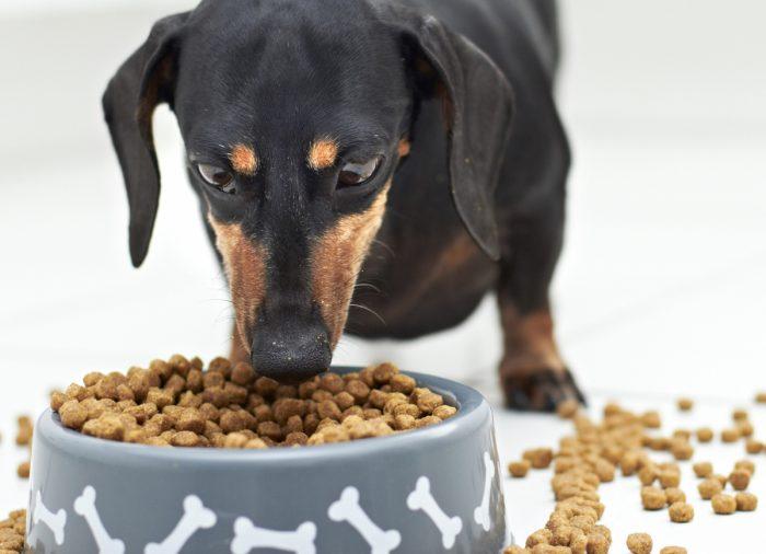 Пиодермия у собак от чего бывает