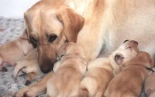 Полезно знать о щенках