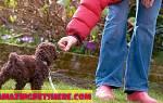Как пользоваться свистком для собак