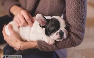 Характер щенка: определяем с помощью теста