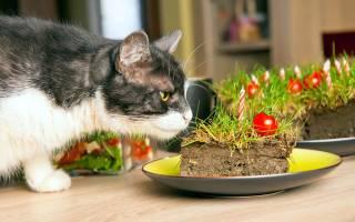 Кошка ест землю. Что делать?