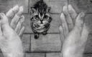 Обзор корма для кошек Nature's Table