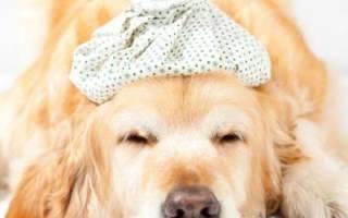 Аденовироз (Аденовирусная инфекция) — как лечить у собак