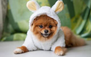 Лакто-стоп для собак — инструкция по применению