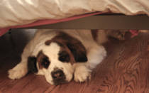 Почему собака стала прятаться?