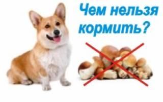 Чем нельзя кормить щенка?