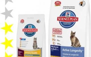 Обзор корма для кошек Science Plan