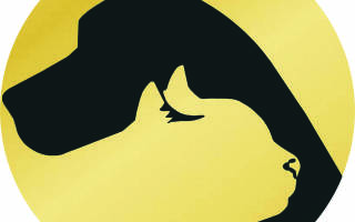 Обзор и отзывы  корма для собак ProSeries