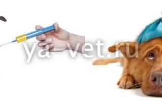 Гепатит инфекционный (болезнь Рубарта) — как лечить у собак