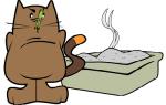 Как организовать туалет для нескольких кошек?