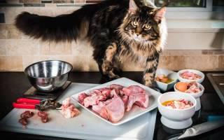 Обзор корма для кошек Perfect Fit