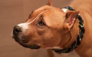 Купирование хвостов и ушей у собак