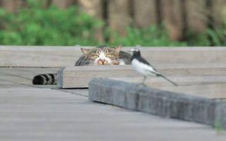 Особенности пищеварения кошки