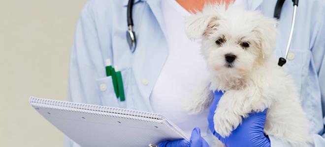 Зачем нужны прививки для собак?