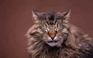 Кошка кашляет. Что делать?
