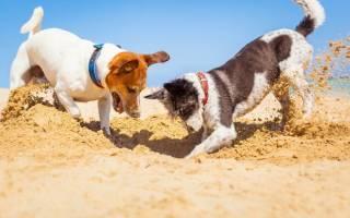 Почему собака роет землю?