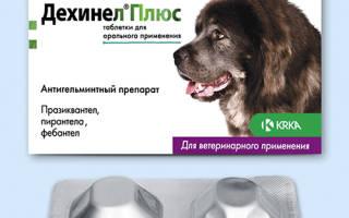 Дехинел Плюс для собак — инструкция по применению