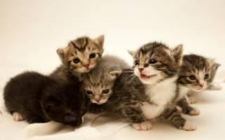Как назвать полосатого или пятнистого котенка