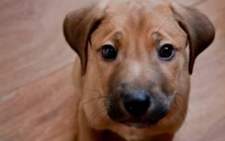 Энтериты корона- и ротавирусные — как лечить у собак