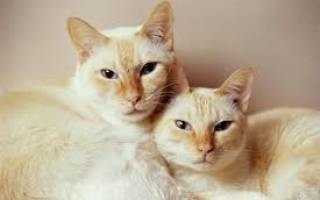 Кого лучше взять: кота или кошку?