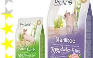 Обзор корма для кошек Profine