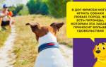 Азинокс плюс для собак: инструкция, отзывы, цена