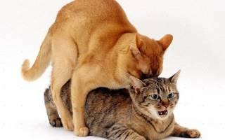 Правила вязки кошек