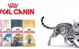 Обзор корма для кошек Royal Canin