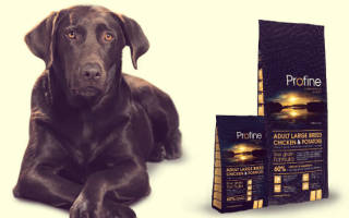 Обзор и отзывы  корма для собак Profine