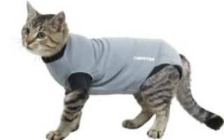 Бандаж для кошки