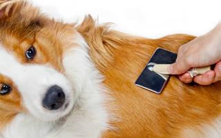 7 главных ошибок в уходе за шерстью собак