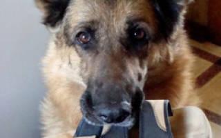 Как научить собаку держать предмет