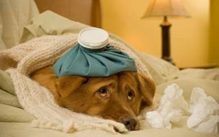 Пневмония  — как лечить у собак