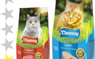 Обзор корма для кошек Chammy
