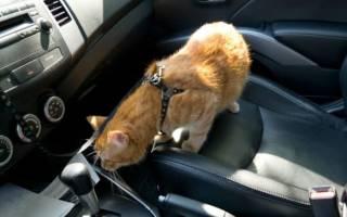 Как правильно перевозить кошку?