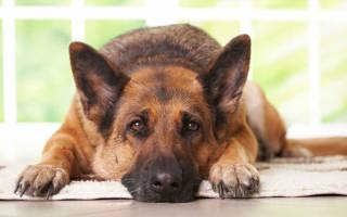 Как приучить собаку оставаться на месте