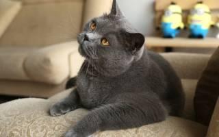 Как приучить котенка к месту для сна?