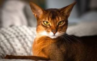 Как выбрать кошку по характеру?