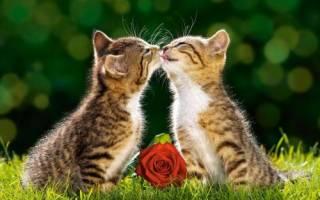 Самые популярные клички для кошек