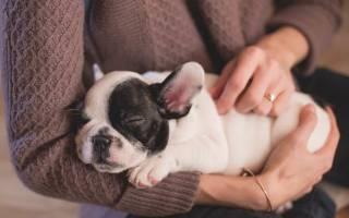 Конъюктивит — как лечить у собак