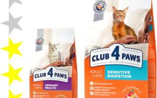 Обзор корма для кошек «Клуб 4 Лапы»