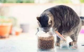 Обзор корма для кошек Brooksfield