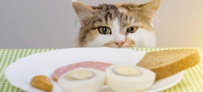 Как выбрать низкокалорийный Обзор корма для кошек?