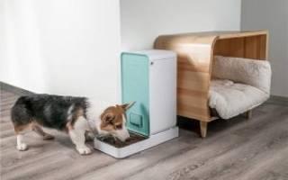 Умная кормушка для собак: зачем нужна и как выбрать