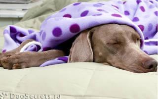 Асептическая резорбтивная лихорадка — как лечить у собак