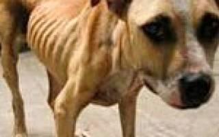 Как помочь тонущей собаке?