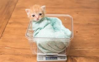 Сколько весит котенок?