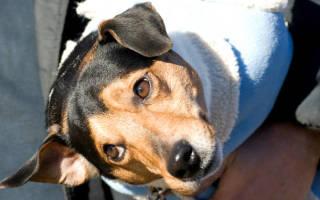 Переноски для собак — выбираем лучшее
